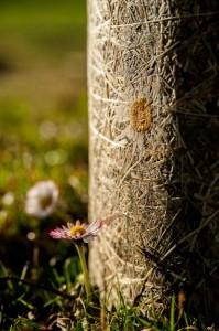 Bei der Stimmungsleuchte wird eine echte Almwiese zu einer durchscheinenden Hülle verpresst. Foto: Tante Lotte Designmöbel