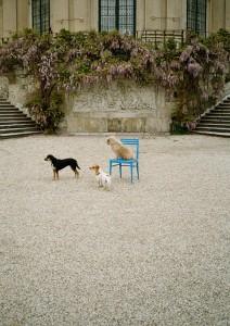 Die achte Vienna Design Week macht Wien zum Design-Schauplatz. Festivalgesicht ist heuer der Hund. Foto: © Katarina šoškić