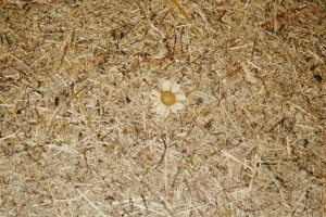 """Natur pur: Verarbeitet werden von Organoid natürliche Materialien wie z.B. Almheu, garniert mit Margeriten bei """"WILDSPITZE MARGERITTA"""". © WOHNDESIGNERS"""